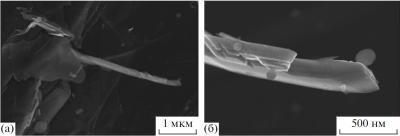 Рис. 8. Выделения углеродистых наноструктур на природном графите (а); фрагмент многослойной углеродной нанотрубки и фулеритоподобных образований (б)