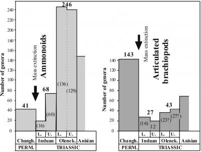 Рис. 5. Особенности восстановления аммоноидей и брахиопод после массового вымирания организмов на рубеже перми и триаса
