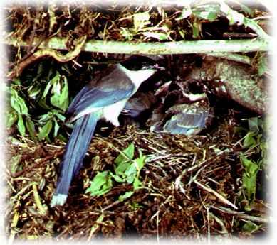 http://www.fegi.ru/primorye/ANIMALS/birds3.jpg